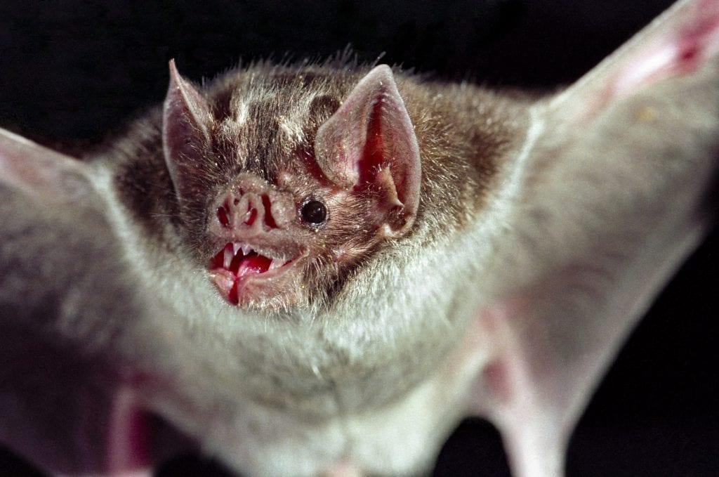 a bat upclose